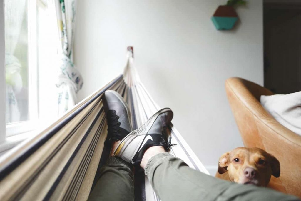 Working from home - Person resting next to their dog